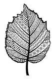 Foglia in bianco e nero di Zentangle della nocciola dell'albero fotografia stock