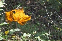 Foglia caduta backlit da luce solare fotografie stock libere da diritti