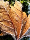Foglia caduta congelata Fotografia Stock Libera da Diritti