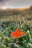 Foglia caduta su Frosty Fall Morning Fotografia Stock Libera da Diritti
