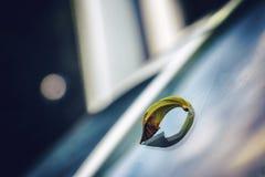 Foglia caduta sul tergicristallo di un'automobile Fotografia Stock