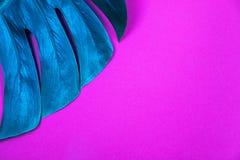 Foglia colorata al neon di monstera di verde della pianta tropicale su fondo viola rosa di plastica acido fotografia stock