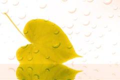 Foglia con le gocce di acqua Immagini Stock Libere da Diritti
