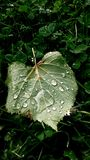 Foglia con le gocce di pioggia Immagini Stock Libere da Diritti
