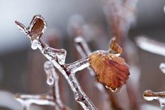 Foglia congelata Fotografia Stock