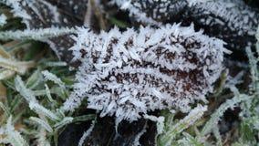 Foglia congelata Immagini Stock