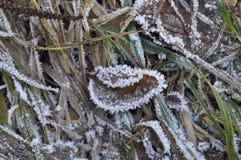 Foglia congelata Fotografia Stock Libera da Diritti