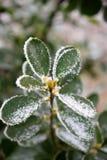 Foglia congelata 1 Fotografia Stock