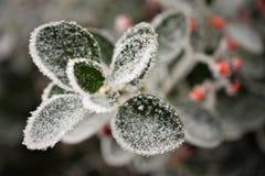 Foglia congelata 2 Fotografia Stock