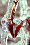 Foglia congelata del cuore Fotografia Stock Libera da Diritti