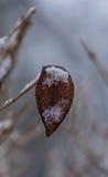 Foglia congelata sul ramo fotografie stock libere da diritti