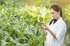 Foglia d'esame della pianta dell'ingegnere della donna di biotecnologia per la malattia Fotografia Stock