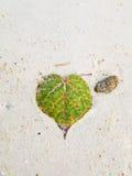 Foglia del cuore Fotografia Stock
