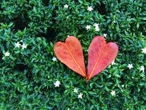 Foglia del cuore su erba verde fotografie stock