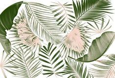 Foglia del fondo della palma Fotografia Stock