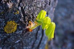 foglia del germoglio dell'albero Fotografia Stock Libera da Diritti