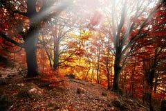 Foglia del sole della nebbia della foresta di autunno Immagine Stock Libera da Diritti