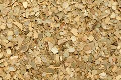 Foglia del taglio e secco di alloro o tejpat indiana organica, tejapatta, cinnamomum tamala della foglia di Malabar Fotografie Stock
