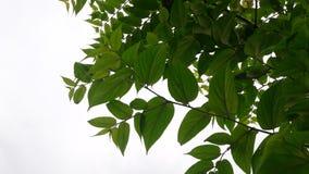 Foglia dell'albero fotografia stock