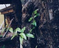 Foglia dell'albero Fotografie Stock Libere da Diritti