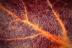 Foglia dell'albero con la superficie del cuoio Fotografia Stock