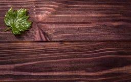 foglia dell'albero sul bordo Fotografie Stock