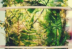 Foglia dell'edera nella lampada fotografia stock libera da diritti