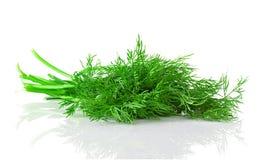 Foglia dell'erba dell'aneto Fotografie Stock Libere da Diritti