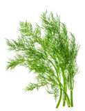 Foglia dell'erba dell'aneto isolata su bianco Ingrediente di alimento Fotografia Stock
