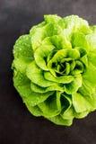Foglia dell'insalata della lattuga Immagini Stock