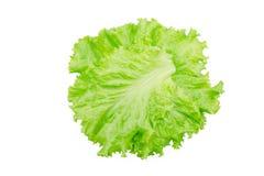 Foglia dell'insalata Lattuga isolata su priorità bassa bianca fotografia stock libera da diritti