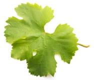 Foglia dell'uva Immagini Stock