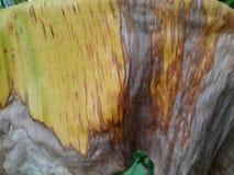 foglia della banana Immagini Stock Libere da Diritti