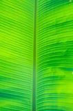 foglia della banana Fotografia Stock