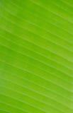 foglia della banana Fotografie Stock