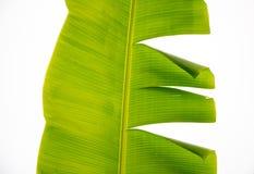 foglia della banana Immagini Stock