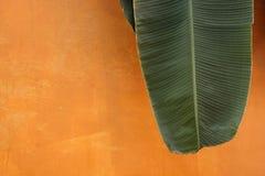 Foglia della banana sulla parete arancio Fotografie Stock Libere da Diritti