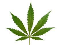 Foglia della cannabis, foglia della marijuana Immagini Stock