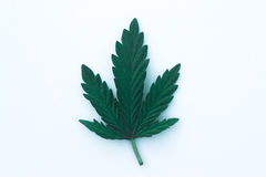 Foglia della cannabis isolata su fondo bianco Fotografie Stock