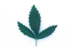 Foglia della cannabis isolata su fondo bianco Fotografia Stock