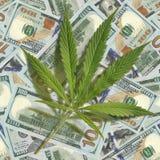 Foglia della cannabis sparsa sui dollari Immagine senza giunte Fotografia Stock Libera da Diritti