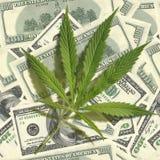 Foglia della cannabis su un mucchio dei dollari Immagine senza giunte Immagine Stock Libera da Diritti
