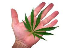 Foglia della cannabis sulla palma isolata sul bianco marijuana Fotografia Stock Libera da Diritti