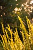 Foglia della felce al tramonto Immagini Stock