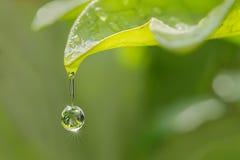 Foglia della felce con goccia di acqua Fotografie Stock
