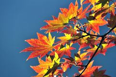 Foglia della felce di stagione di autunno Immagine Stock