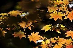 Foglia della felce di stagione di autunno Immagine Stock Libera da Diritti