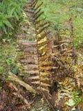 Foglia della felce su una radura della foresta Immagine Stock Libera da Diritti