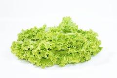 Foglia della lattuga su fondo bianco, ingrediente dell'insalata fotografia stock