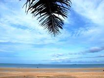 Foglia della noce di cocco accanto alla spiaggia Fotografia Stock Libera da Diritti